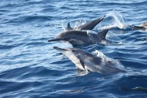 Island Hopping, Dolphin Watching