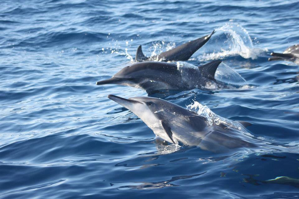 Dolphin Sight Seeing Tours